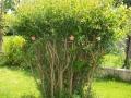 albero bello giardino