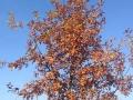 albero bosco autunno