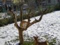 cane e gatto su neve
